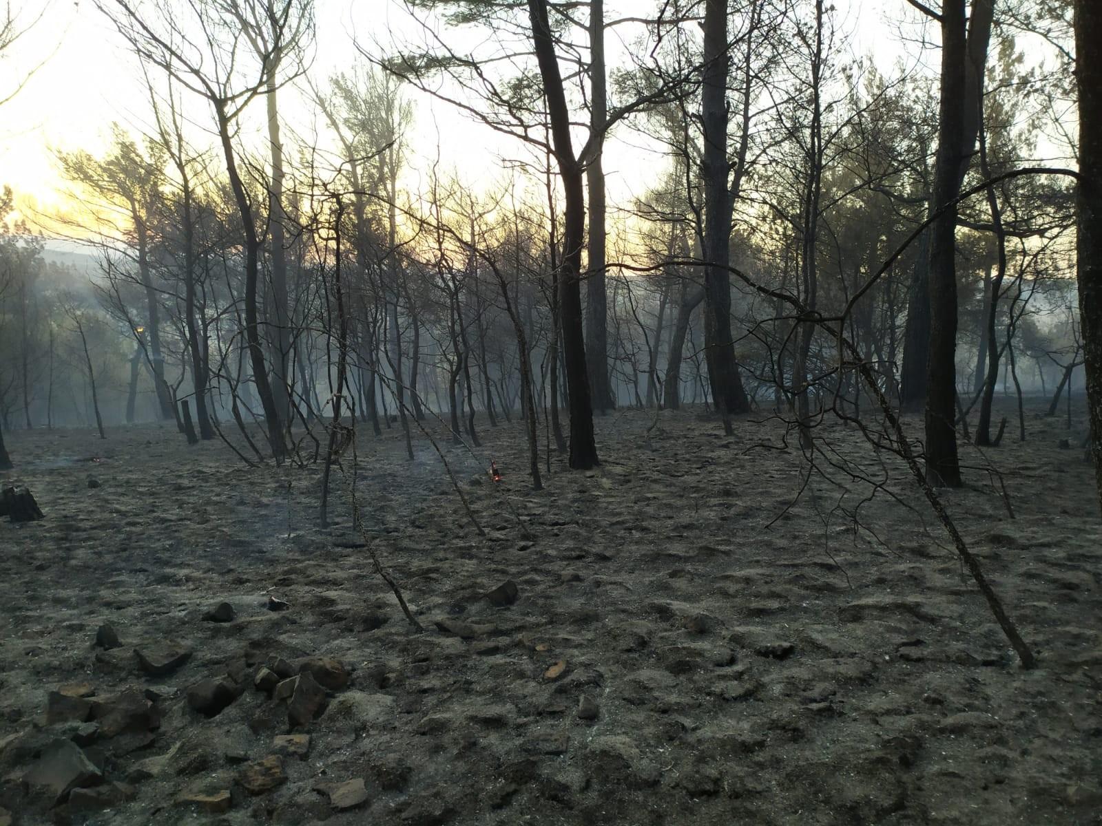 Bakan Pakdemirli: 19 yangından 15'i kontrol altına alındı #2