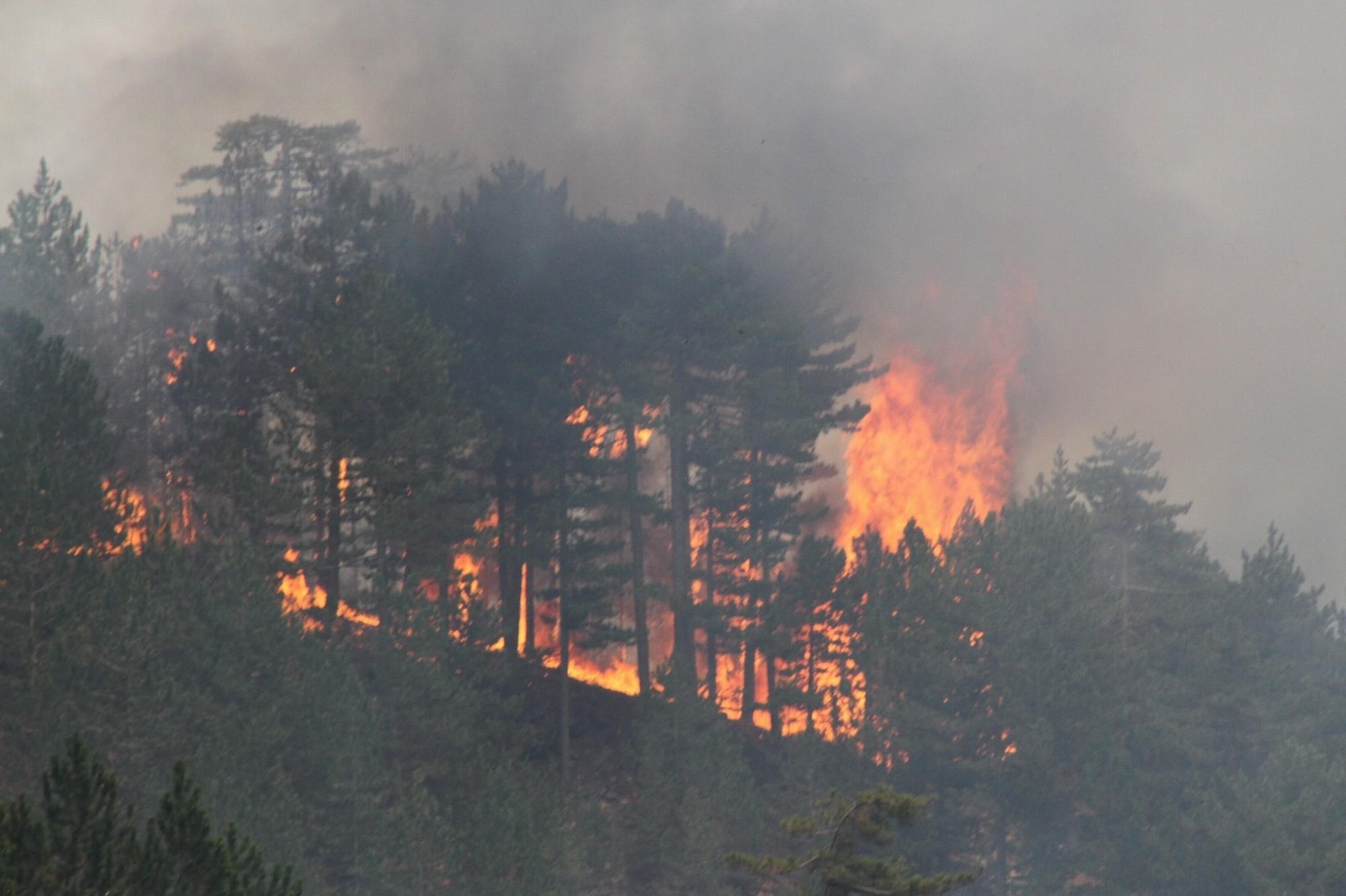 Bakan Pakdemirli: 19 yangından 15'i kontrol altına alındı #1