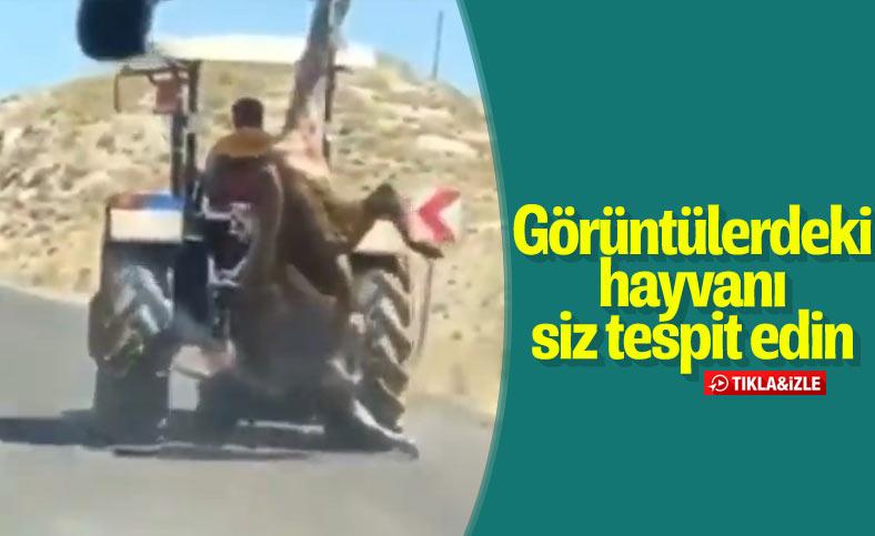 Sivas'ta kurbanlığa işkence cezasız kalmadı