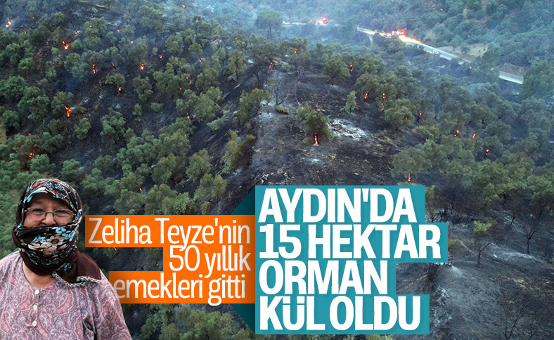Aydın'da ağaçlık arazide yangın çıktı