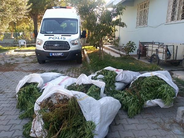 Bergama'da 400 kök Hint keneviri ele geçirildi #1