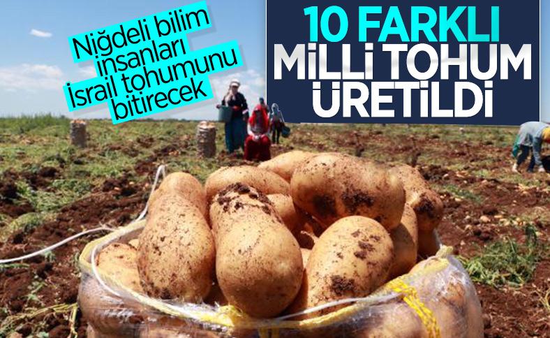 Niğde'de hastalıklara dayanıklı yerli ve milli patates