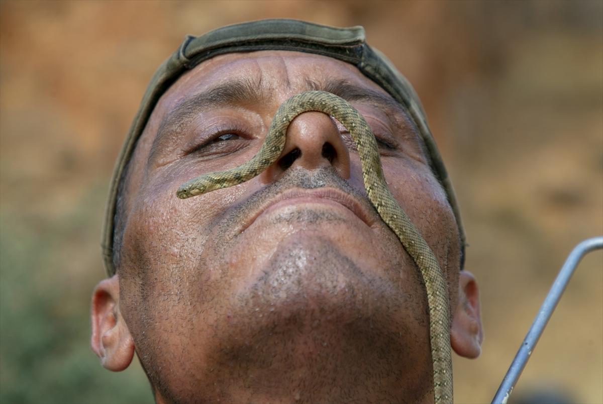 Tunuslu yılan avcısının iş aşkı #3