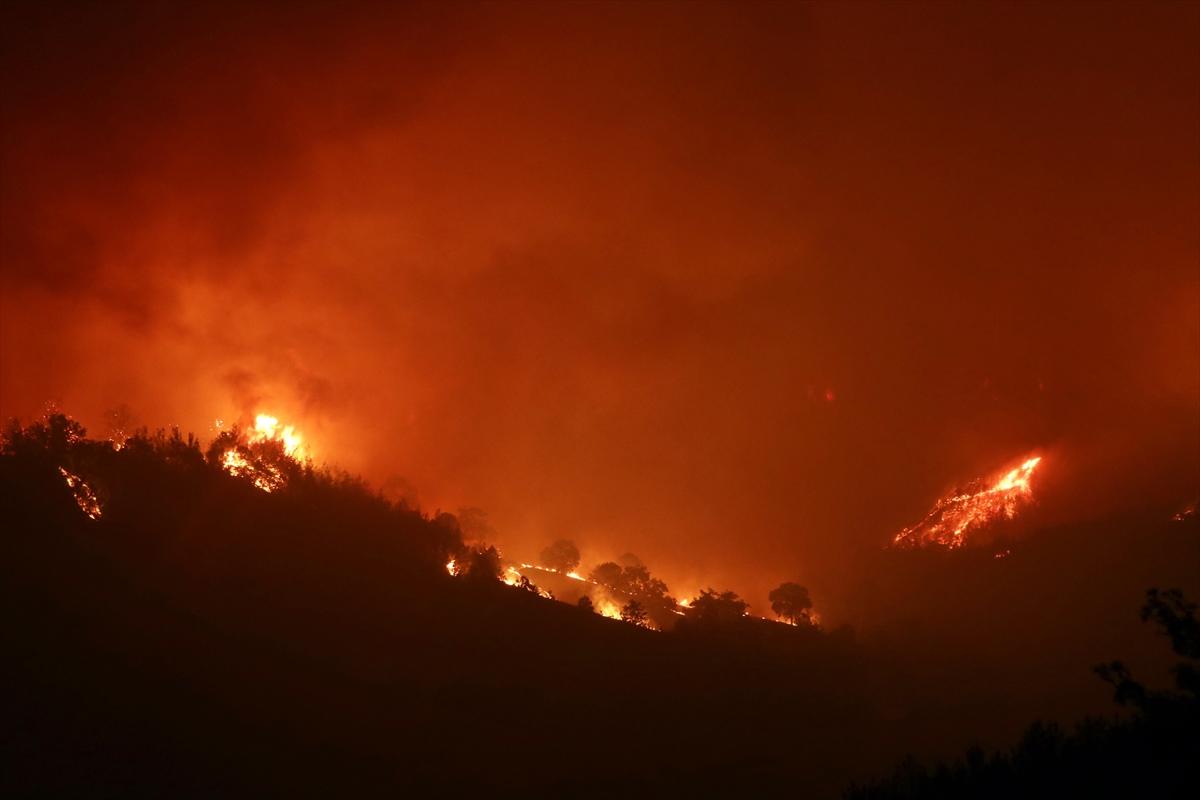 Adana da orman yangını #10