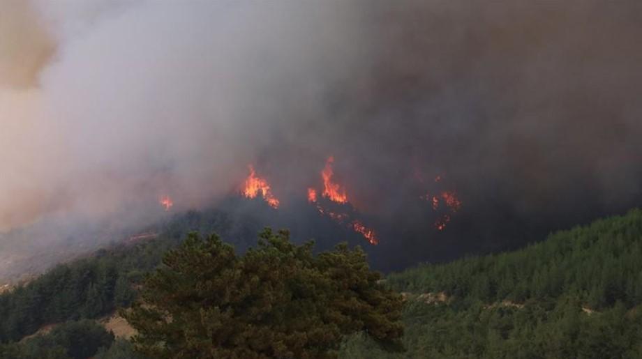 Adana da orman yangını #4