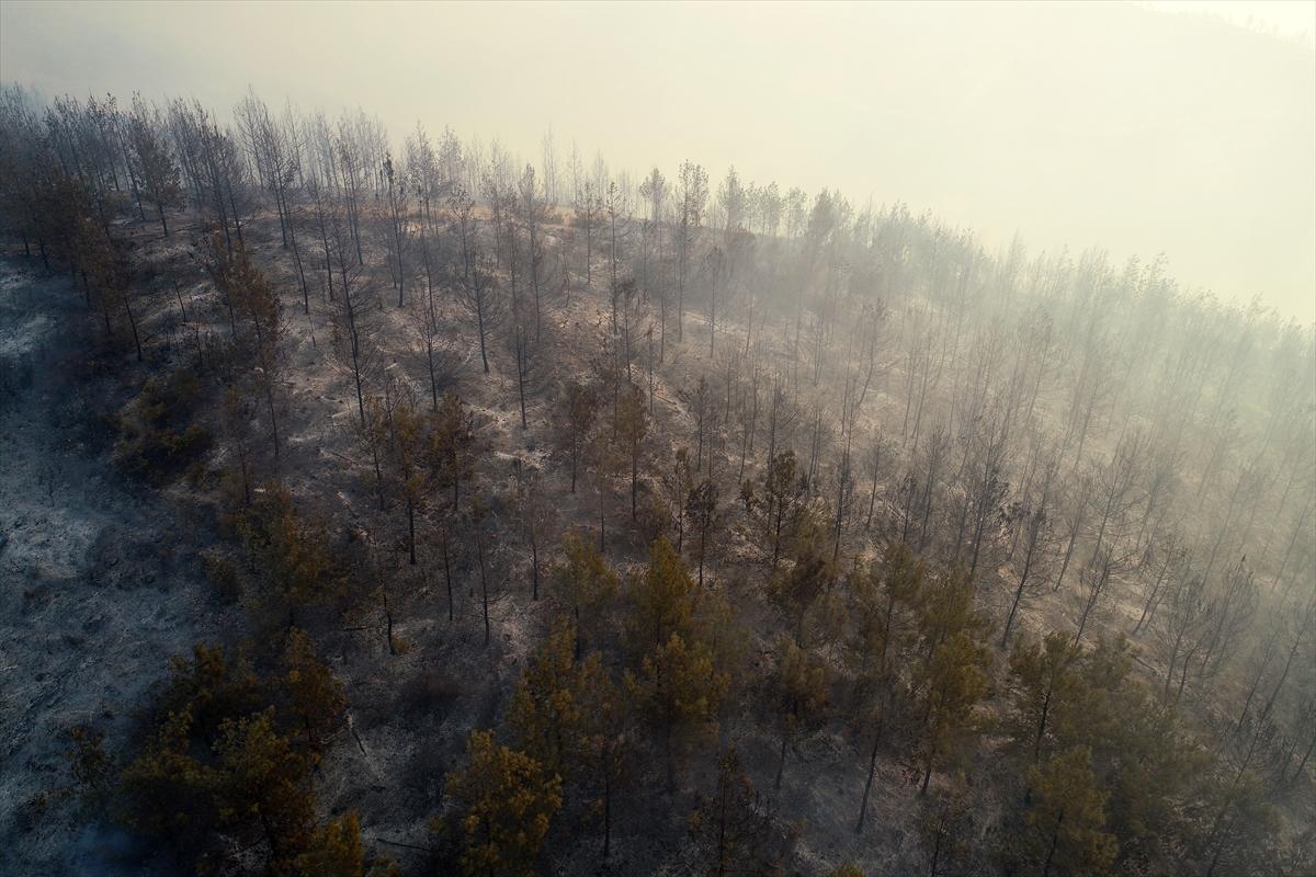Adana da orman yangını #13