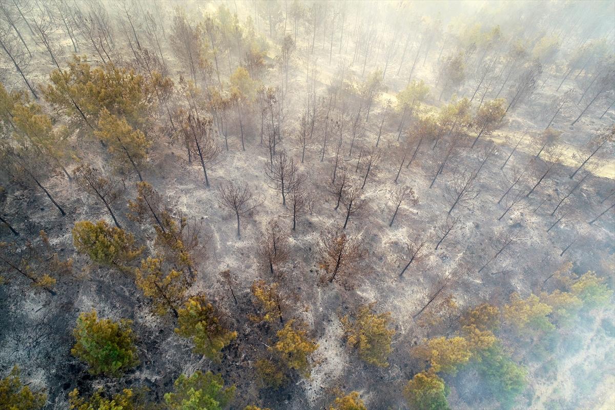 Adana da orman yangını #11