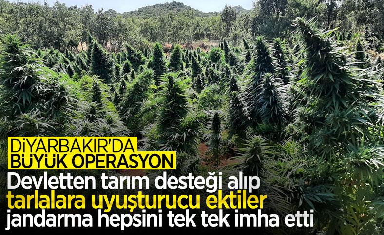 Diyarbakır'da PKK'nın finans kaynağına darbe: 4,5 milyon kök kenevir, 800 kilo esrar
