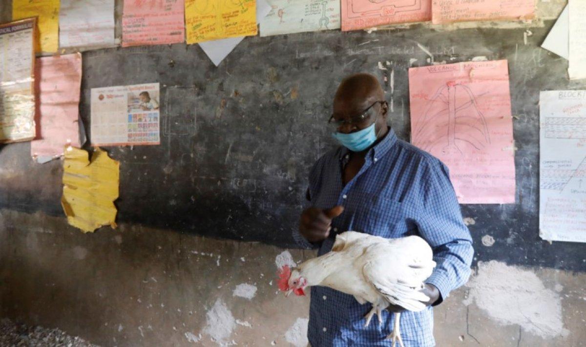 Kenya da sınıflarda öğrencilerin yerini tavuklar aldı #3