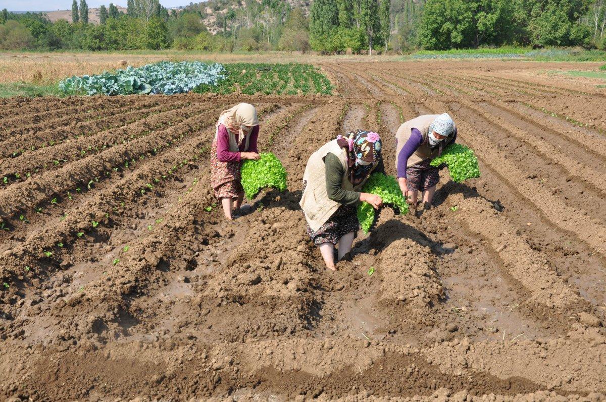 Kütahya da köylüler, tarım arazilerinin sanayileştirilmesini istemiyor #4