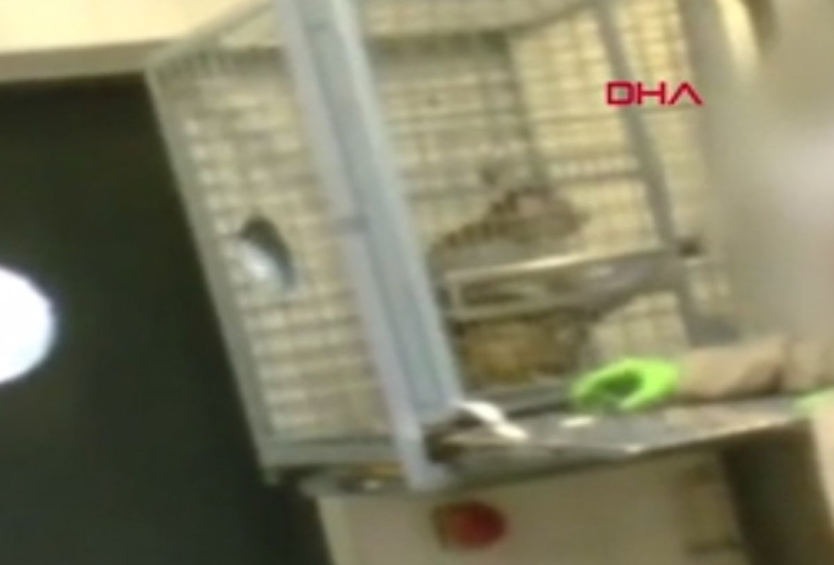 Belçika'da bilim adamları denek maymunlara işkence ediyor #1