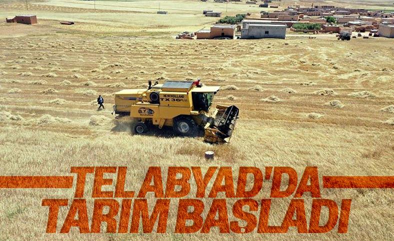 Teröristlerden temizlenen Tel Abyad'da ticaret başladı