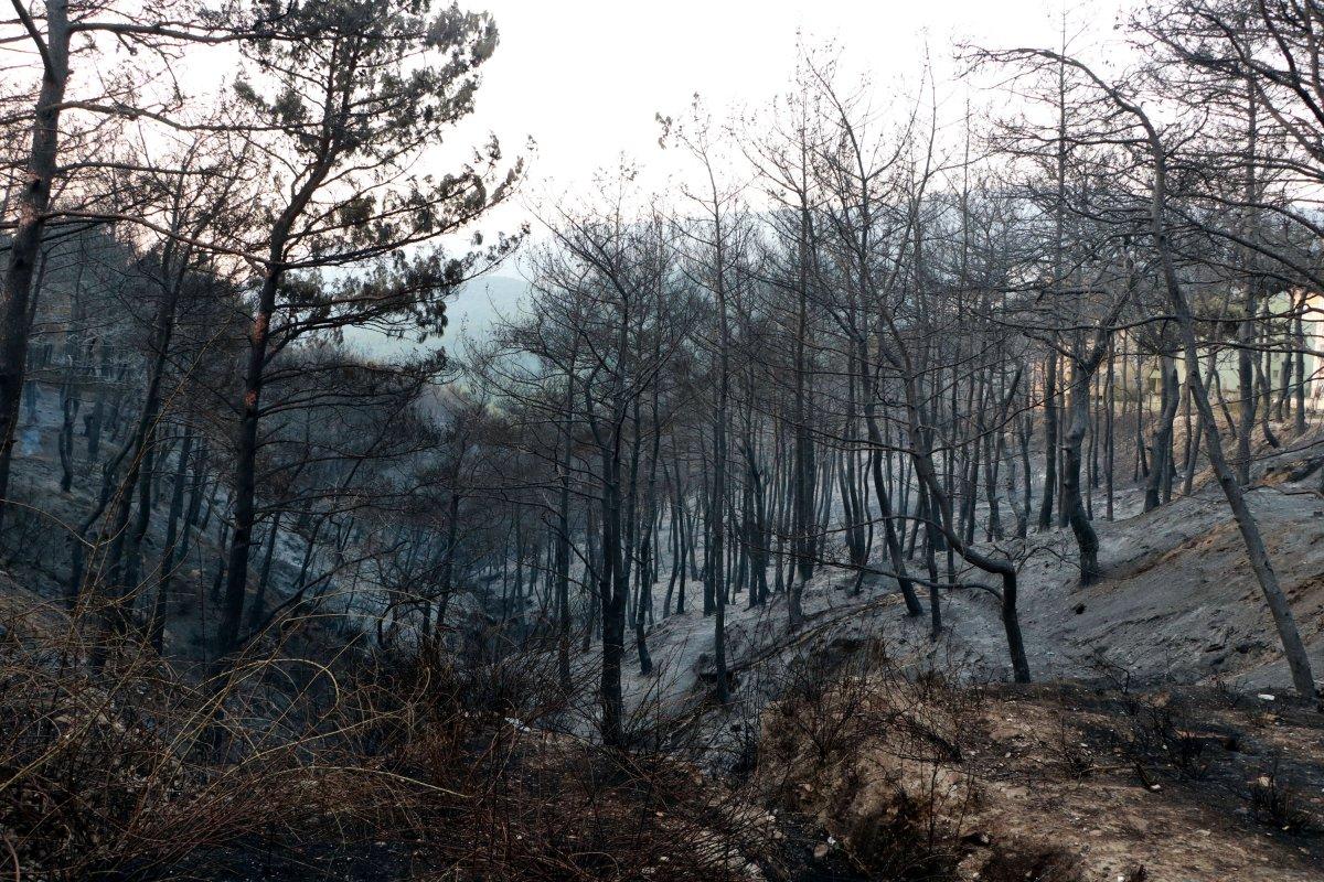 Hatay da yangın sonrası ortaya çıkan acı manzaralar #2