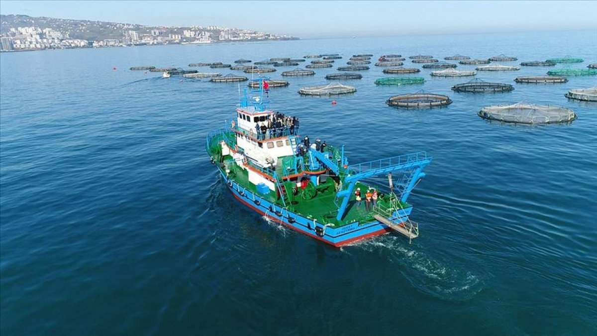 Doğu Karadeniz, su ürünleri ihracatını rekor düzeyde artırdı #2