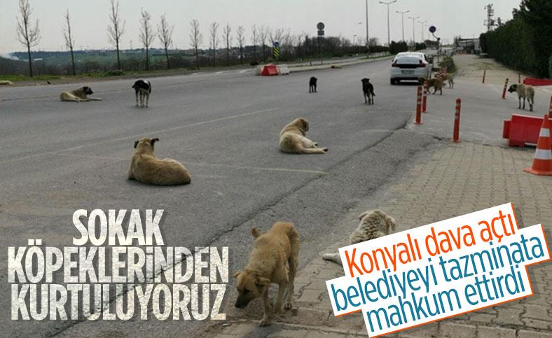 Konya'da sokak köpeklerinin ısırdığı kişinin belediyeye açtığı davasında emsal karar