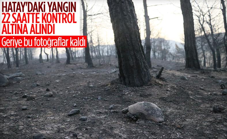 Bekir Pakdemirli: İskenderun'da başlayan yangın kontrol altına alındı