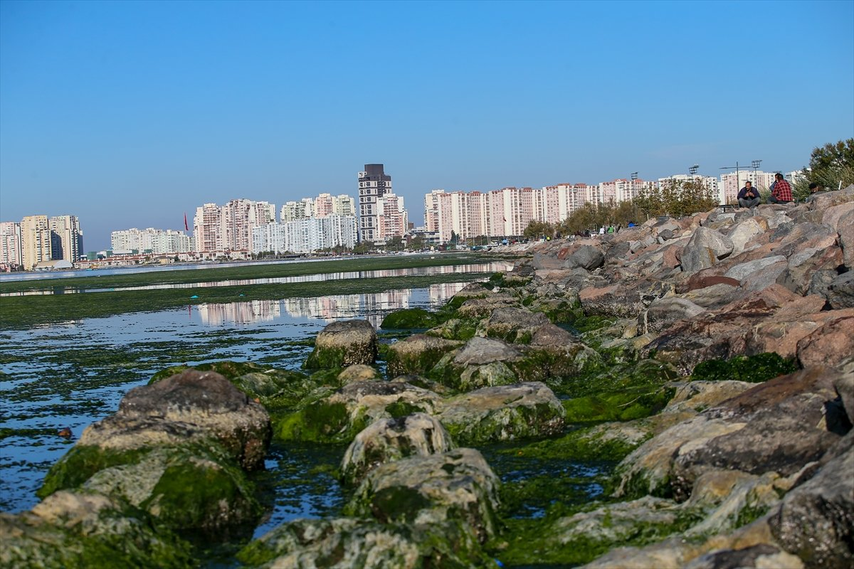 İzmir Körfezi ni yosun sardı #6