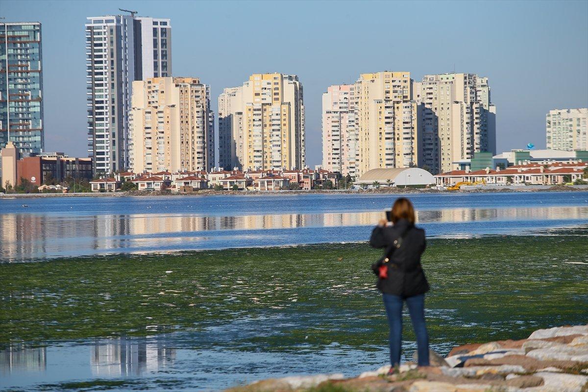 İzmir Körfezi ni yosun sardı #5