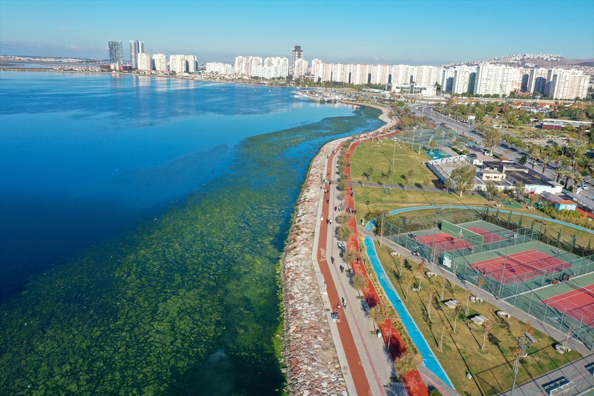 İzmir Körfezi ni yosun sardı #3
