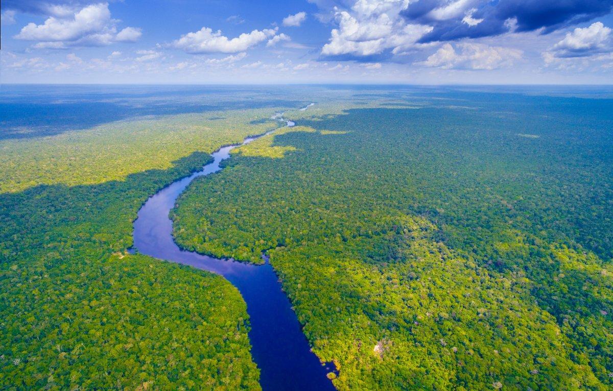 Bilim insanları: Amazon yağmur ormanlarındaki kayıp korkunç boyutlara ulaştı #2