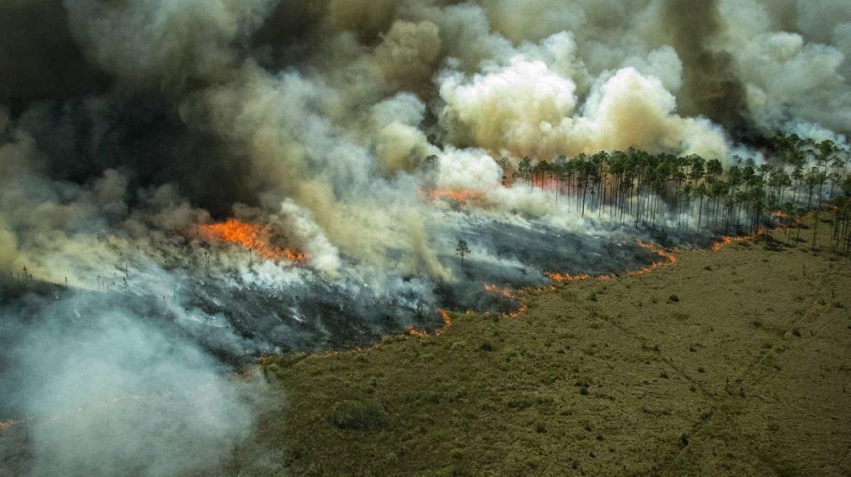 Bilim insanları: Amazon yağmur ormanlarındaki kayıp korkunç boyutlara ulaştı #1
