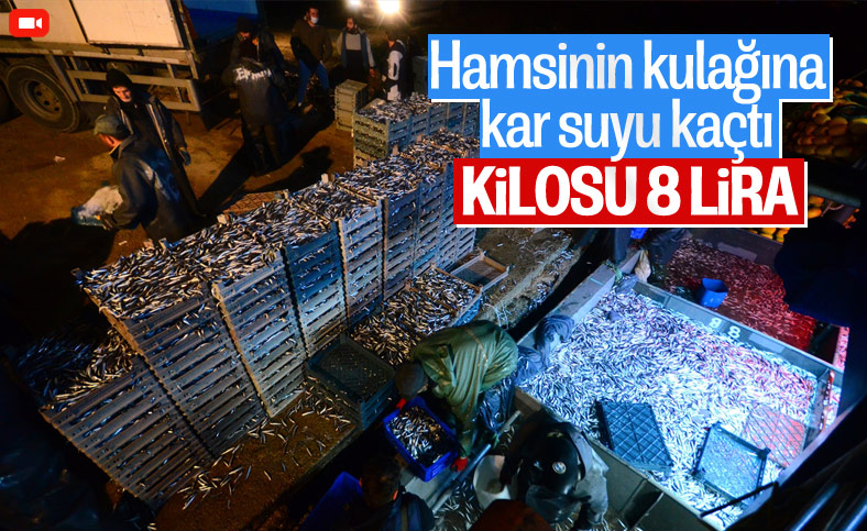 Karadeniz'de hamsi bereketi: Kilosu 8 liraya düştü