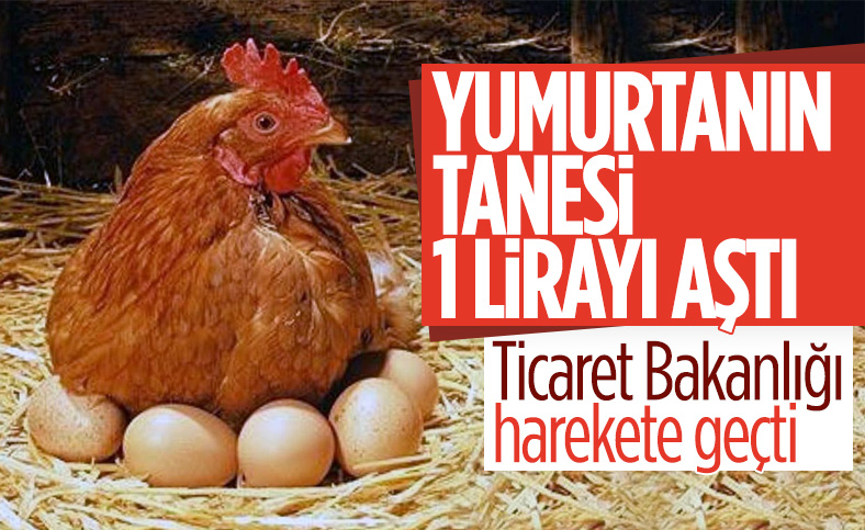 Yumurtanın fiyatı, tavuğu solladı: Kolisi 34 lira