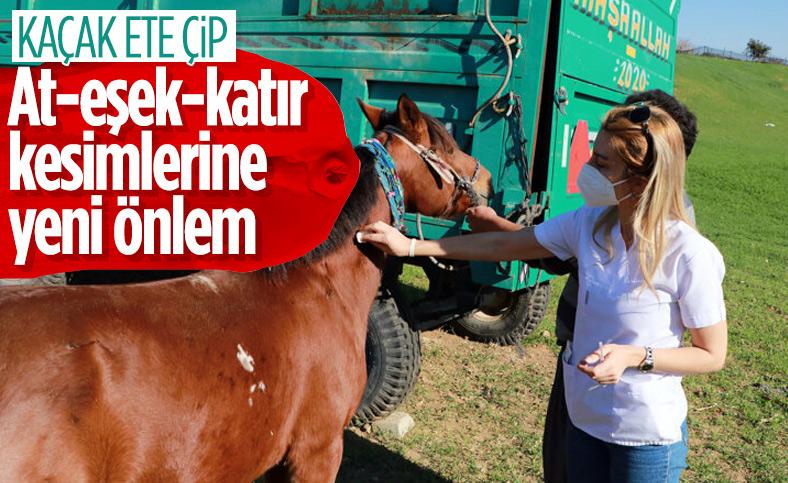 Adana'da kaçak kesimler, at, eşek ve katırlara çip takılarak önlenecek