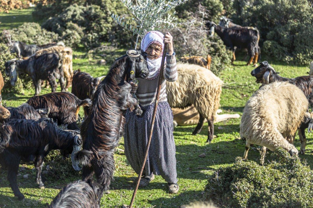 Hatay da yarım asırdır çobanlık yapan Fatma Teyze #2