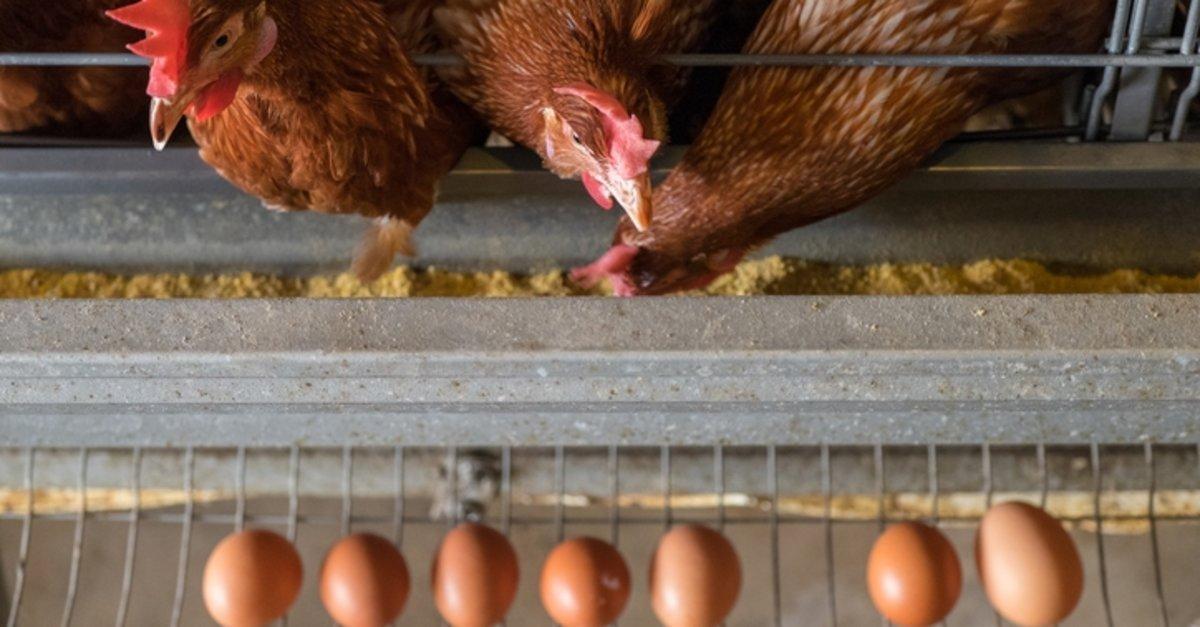 Türkiye Yumurta Üreticileri Birliği: Yumurtacı 17 ay zarar etti #2