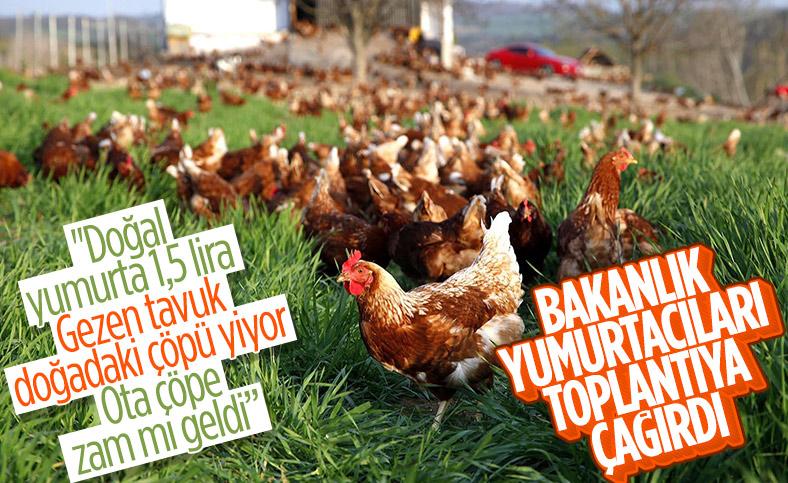 Tarım ve Orman Bakanlığı yumurta zamları için harekete geçti