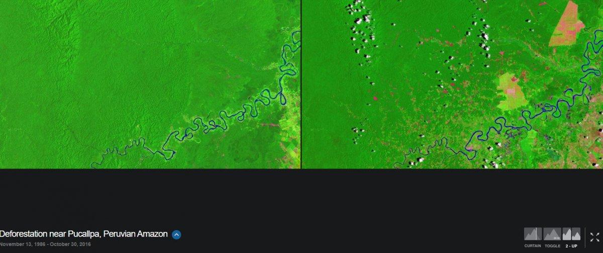 AMAZON ORMANLARI