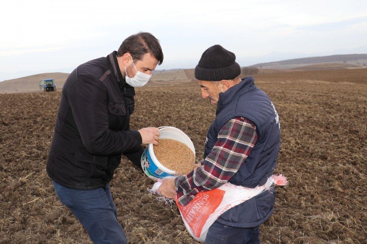 Havza'da iki farklı ata tohumu toprakla buluştu #2