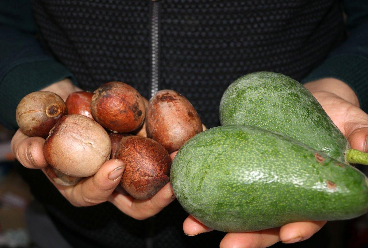 Alanya'da avokado çekirdeği ile alışveriş