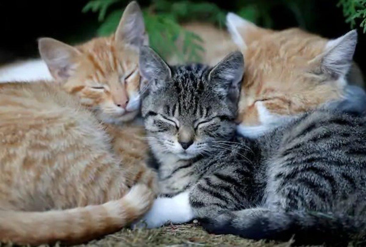 Kediler, otizmli çocuklar üzerinde olumlu etki yapıyor #1