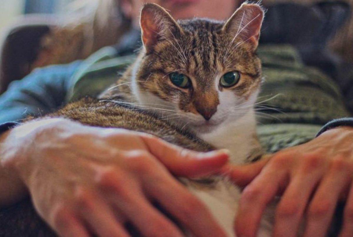 Kediler, otizmli çocuklar üzerinde olumlu etki yapıyor