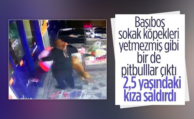 Ankara'da markete gelen minik Bahar'a pitbull saldırdı