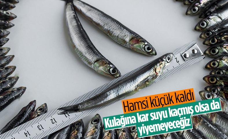 Hamsi avı yasağı, 3'üncü defa uzatıldı