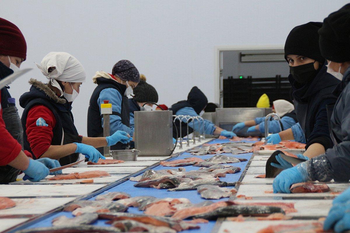 Karadeniz somonu, en çok Rusya ya ihraç edildi #2