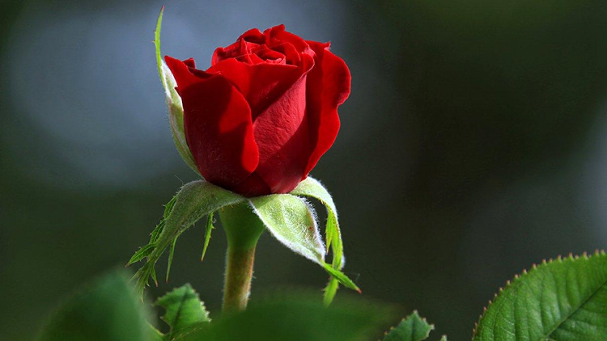 Kısıtlamaya denk gelen Sevgililer Günü hediyeleri erkenden alınacak #1