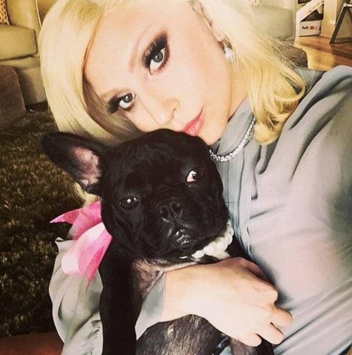 Lady Gaga nın köpekleri çalındı #2