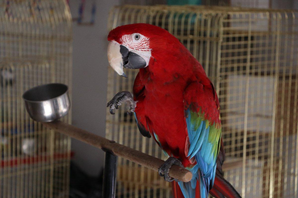 papagan mersin 2293
