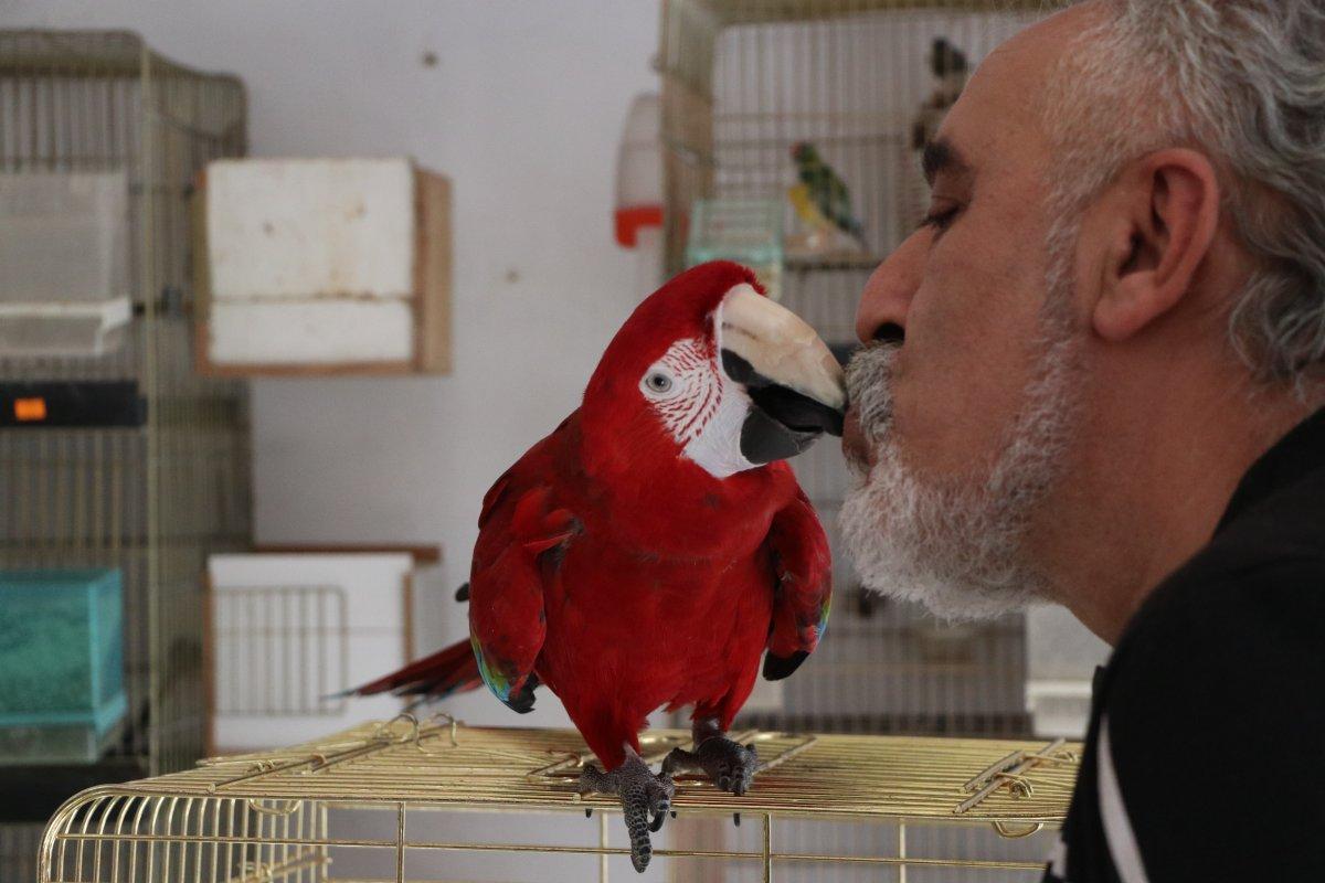 papagan mersin 8920