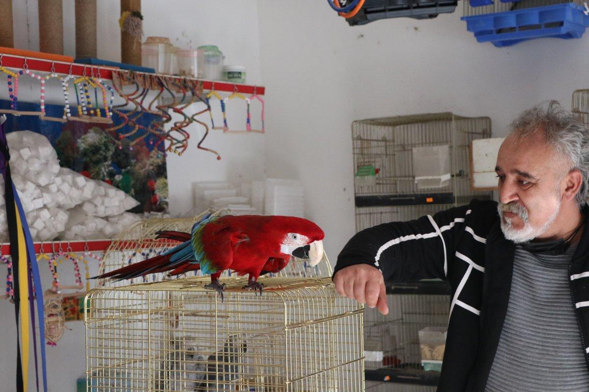 papagan mersin 8975