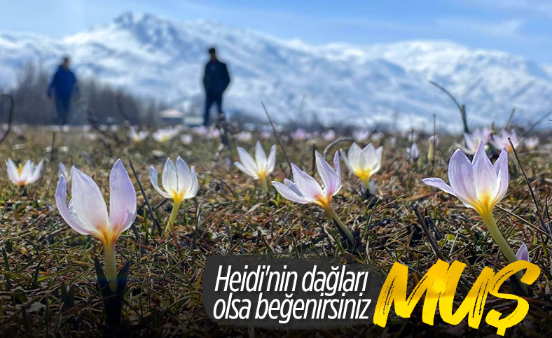 Muş Ovası'nda kardelenler çiçek açtı