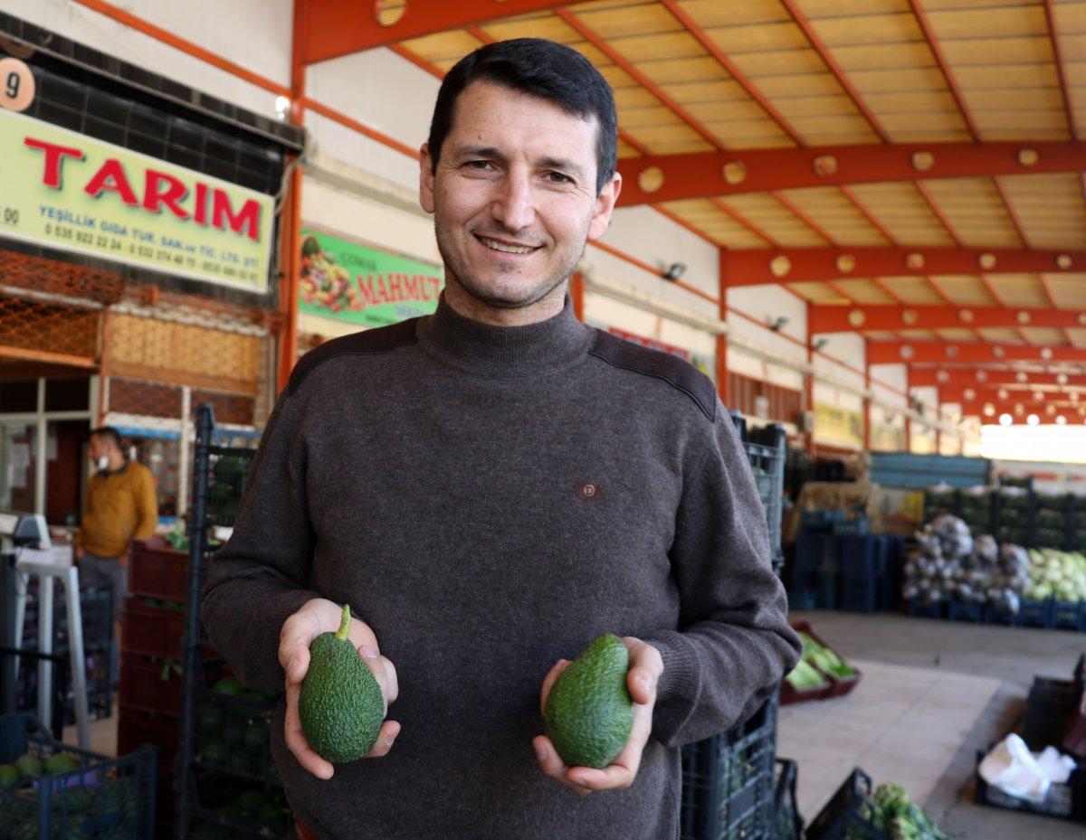 Antalya da yetişen avokado, pandemide büyük talep görüyor #1