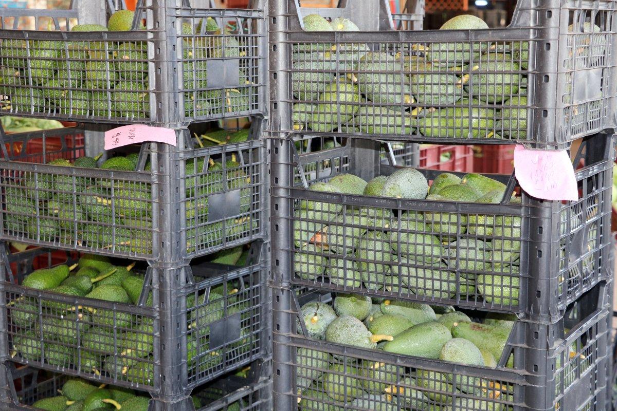 Antalya da yetişen avokado, pandemide büyük talep görüyor #2
