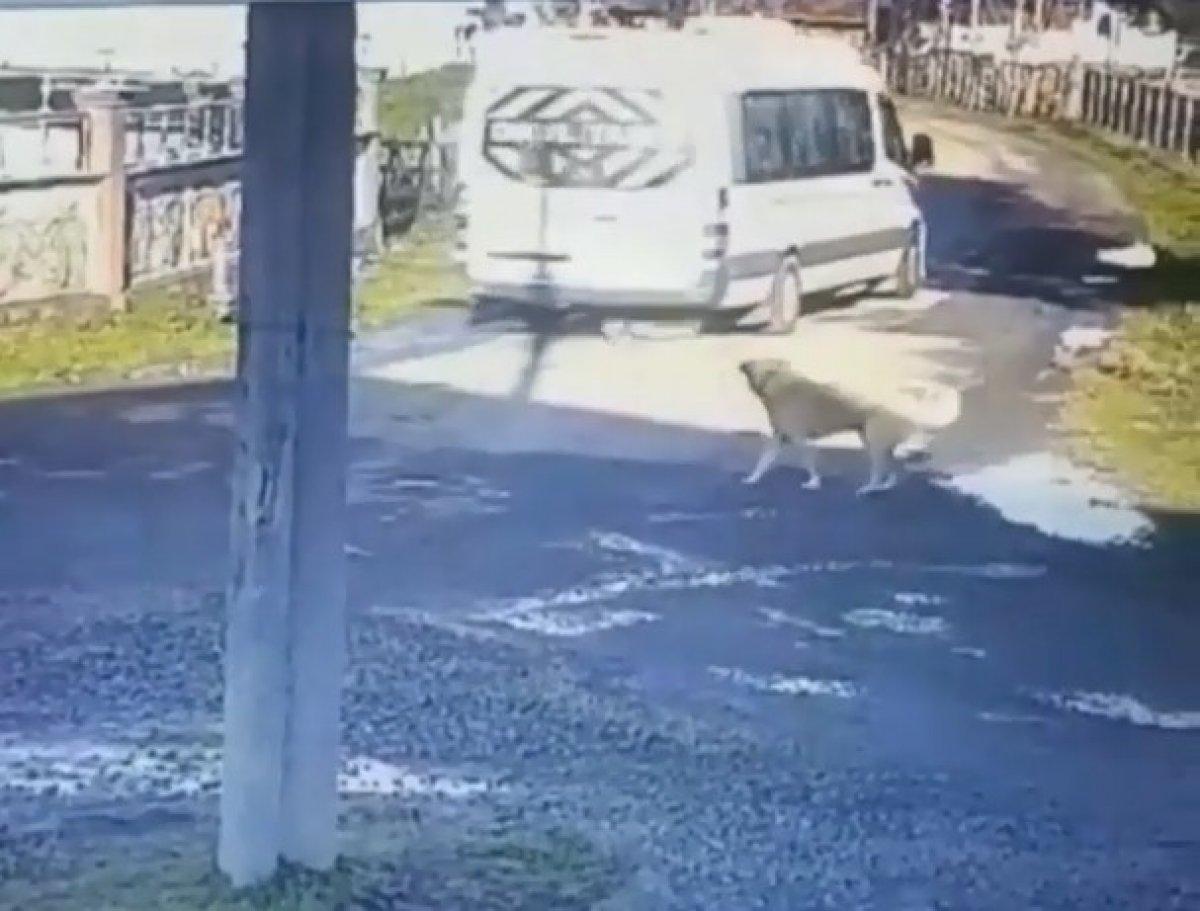 Samsun'da servis aracı ile sokak köpeğinin üzerinden geçti #3