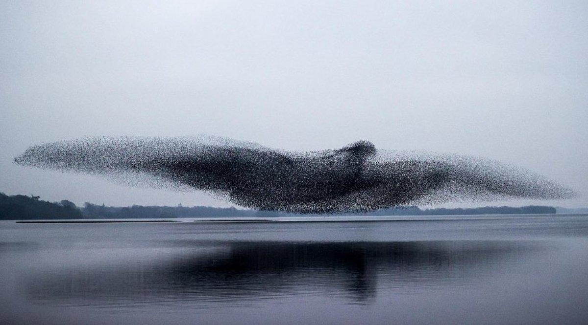 Sığırcık kuşlarının gökyüzündeki toplu şöleni #2