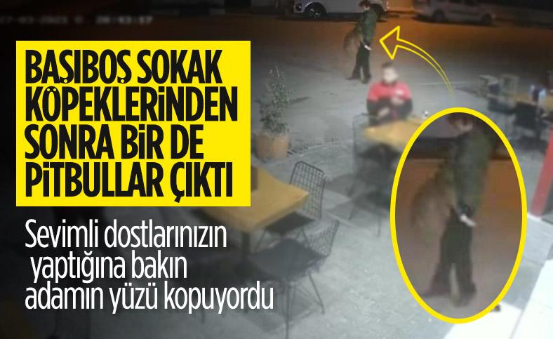 Bodrum'da pitbull saldırısı